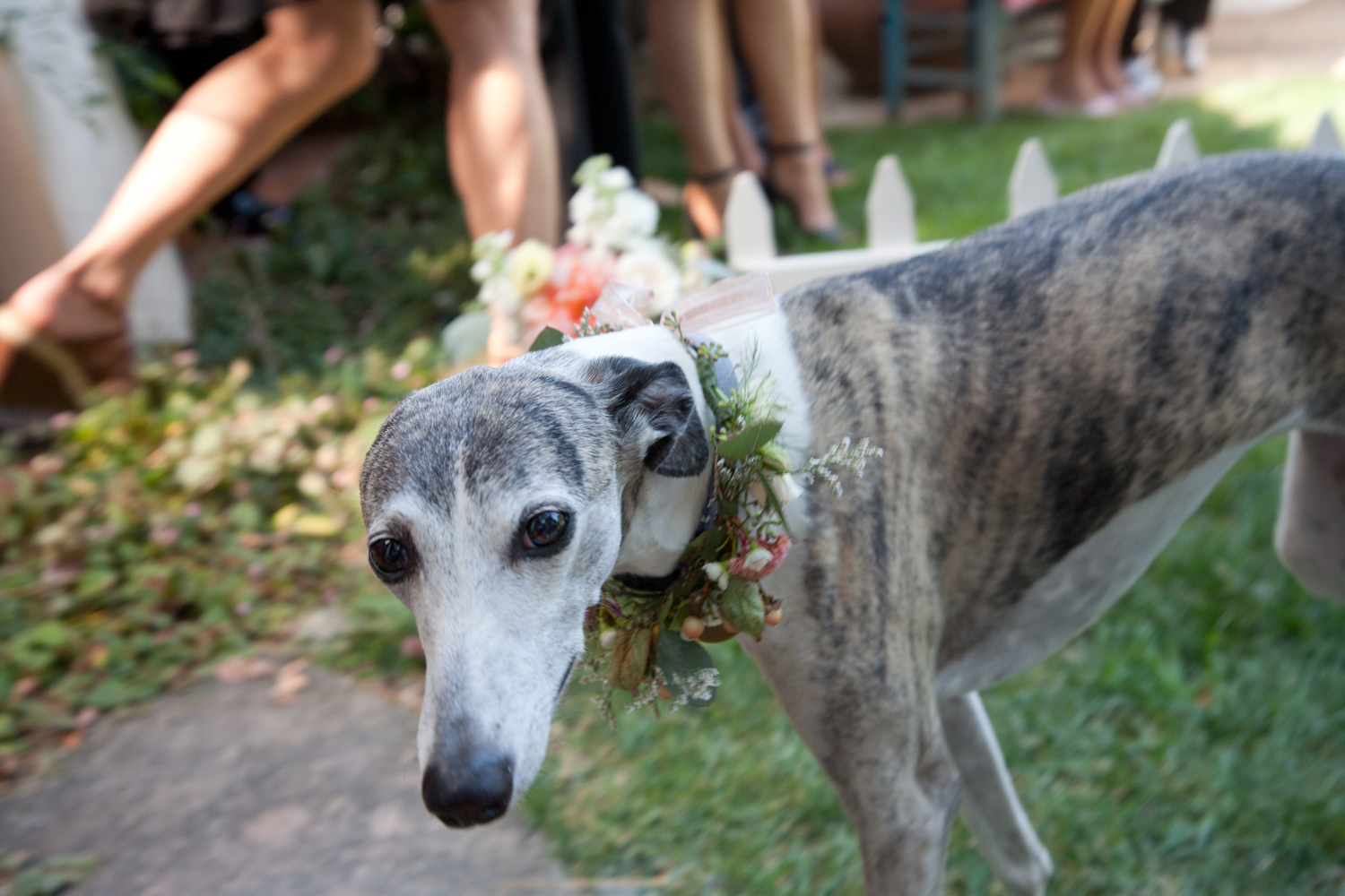 Allie and Ryan's dogs were dressed up for the wedding in handmade floral collars